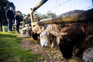 PH-family-and-farm-11