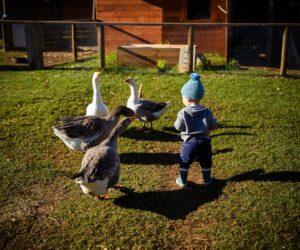 PH-family-and-farm-13